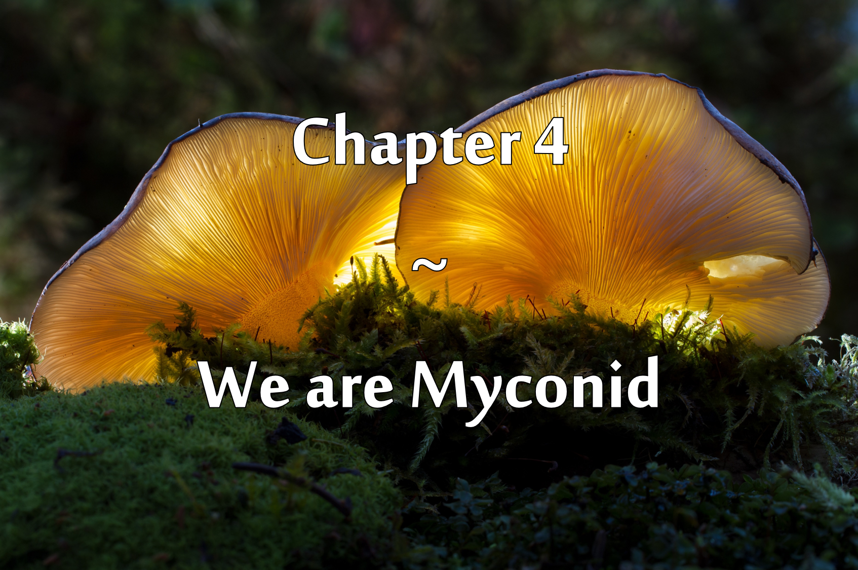 Two bright yellow mushrooms growing amidst moss